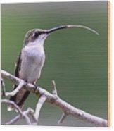 Img_1768-001 - Ruby-throated Hummingbird Wood Print