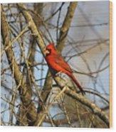 Img_2757-001 - Northern Cardinal Wood Print