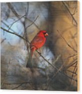 Img_2866-001 -  Northern Cardinal Wood Print