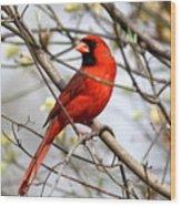 Img_2902-004 - Northern Cardinal Wood Print