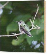 Img_3309 - Ruby-throated Hummingbird Wood Print
