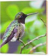 Img_3524-002 - Ruby-throated Hummingbird Wood Print