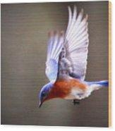 Img_4139-003 - Eastern Bluebird Wood Print