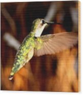 Img_4625 - Ruby-throated Hummingbird Wood Print