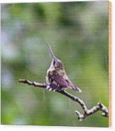 Img_5271-001 - Ruby-throated Hummingbird Wood Print