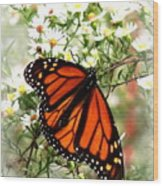 Img_5284-001 - Butterfly Wood Print