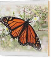 Img_5290-004 - Butterfly Wood Print
