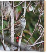 Img_6624-002 - White-throated Sparrow Wood Print
