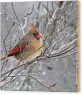 Img_6770 - Northern Cardinal Wood Print