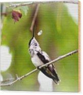 Img_7436-020 - Ruby-throated Hummingbird Wood Print