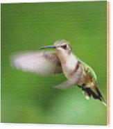 Img_7512 - Ruby-throated Hummingbird Wood Print