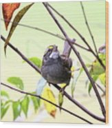 Img_7541-002 - White-throated Sparrow Wood Print
