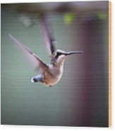 Img_8532 - Ruby-throated Hummingbird Wood Print