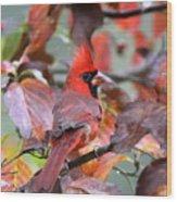 Img_ 8621 - Northern Cardinal Wood Print
