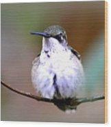 Img_8835 - Ruby-throated Hummingbird Wood Print