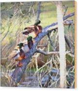 Img_8884-002 - Mallard Wood Print