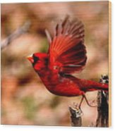 Img_8892 - Northern Cardinal Wood Print