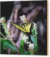 Img_8960 - Tiger Swallowtail Butterfly Wood Print