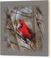 Img_9241 - Northern Cardinal Wood Print
