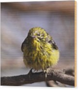 Img_9853 - Pine Warbler -  Very Wet Wood Print