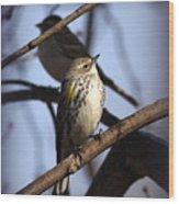 Img_9896 - Yellow-rumped Warbler Wood Print