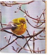 Img_9900 - Pine Warbler Wood Print