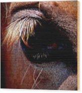 Img_9984 - Horse Wood Print