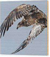Immature Bald Eagle Leaving A Perch Wood Print
