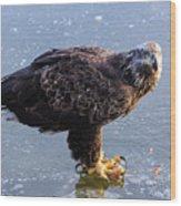 Immature Eagle Having Lunch Wood Print