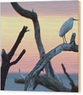 Immature Heron Glow Wood Print
