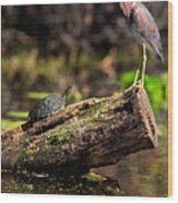 Immature Tri-colored Heron And Peninsula Cooter Turtle Wood Print
