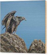 Immature Turkey Vulture 3 Wood Print