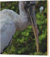 Immature Wood Stork Wood Print