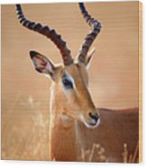 Impala Male Portrait Wood Print