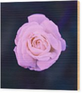 Imperfect Rose #1 Wood Print