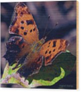 Imperfect Satyr Comma Wood Print