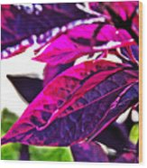 Impressionistic Purple Leaves Wood Print