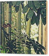 In A Bamboo Garden Wood Print