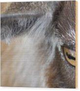 In A Goat's Eye Wood Print