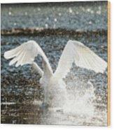 In A Splash Wood Print