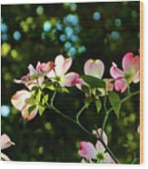 In Another Spring 2013 002 Wood Print