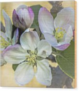 In Apple Blossom Time Wood Print