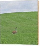 In Fields Of Green Wood Print