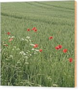 in Flanders Fields the  poppies blow Wood Print