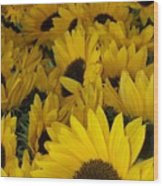 In Full Bloom - Sunflowers Wood Print