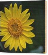 In Full Bloom Wood Print