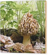 In Hiding - Morel Mushroom Wood Print
