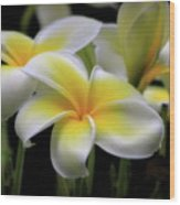 In Love With Butterflies Plumeria Flower Cecil B Day Butterfly Center Art Wood Print