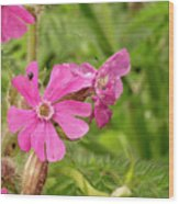 In Meadows II Wood Print