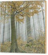 In Mist 1 Wood Print